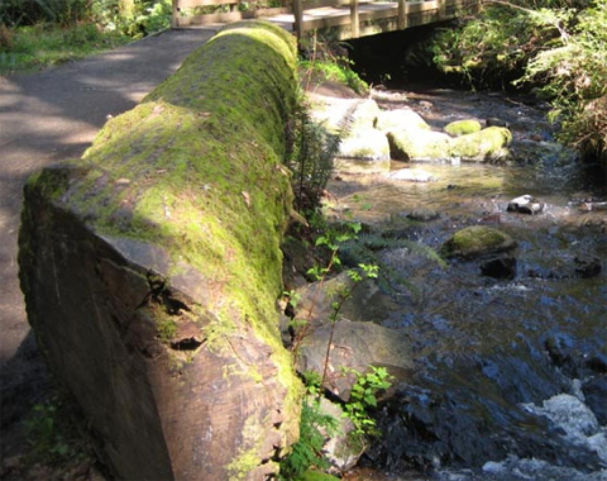 Mossy log by a paved trail and small stream